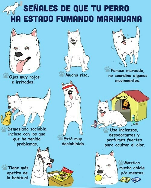 viñetas,perros,bromas
