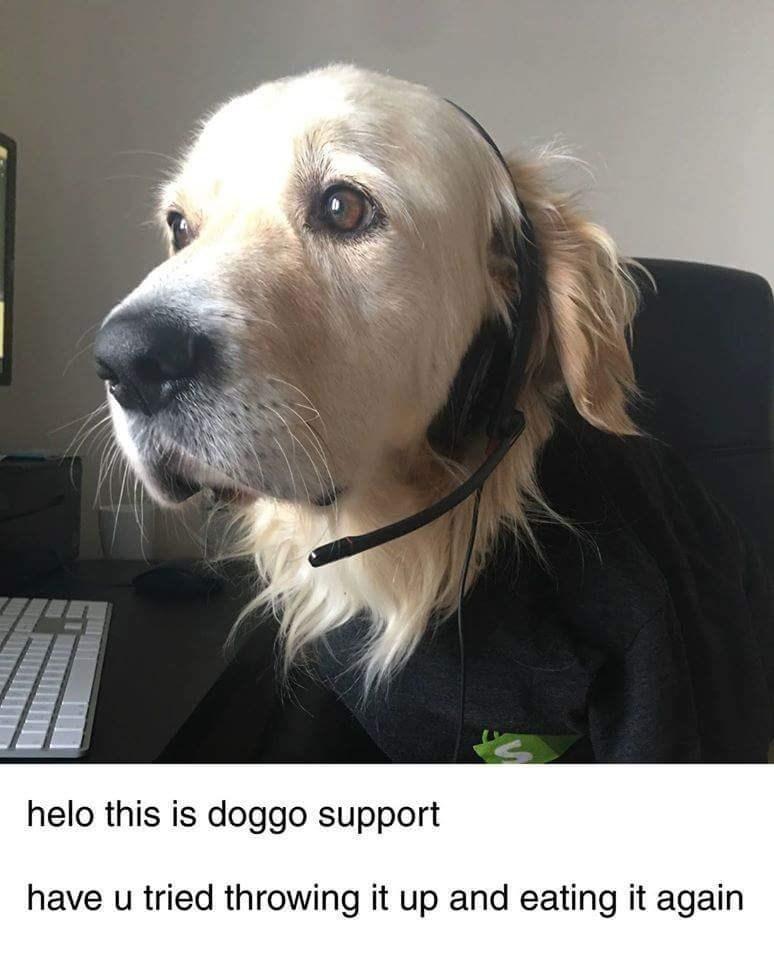 doggo me_irl - 9009002752