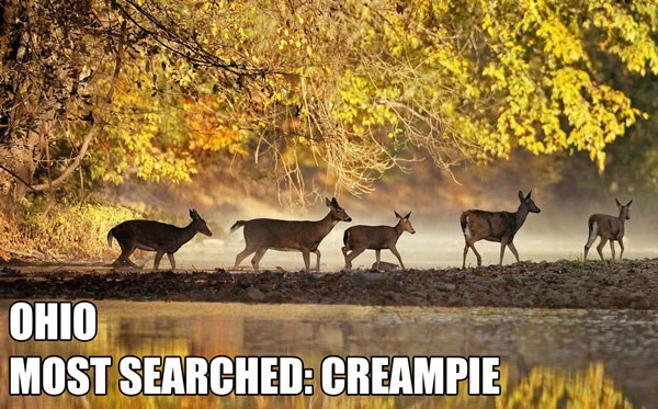 Most Searched Porn Term - Wildlife - ОНIО MOST SEARCHED: CREAMPIE