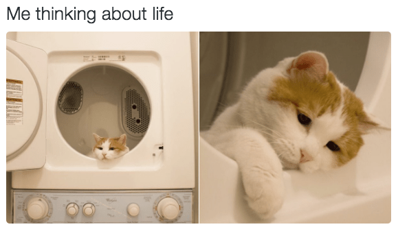 Cat - Me thinking about life