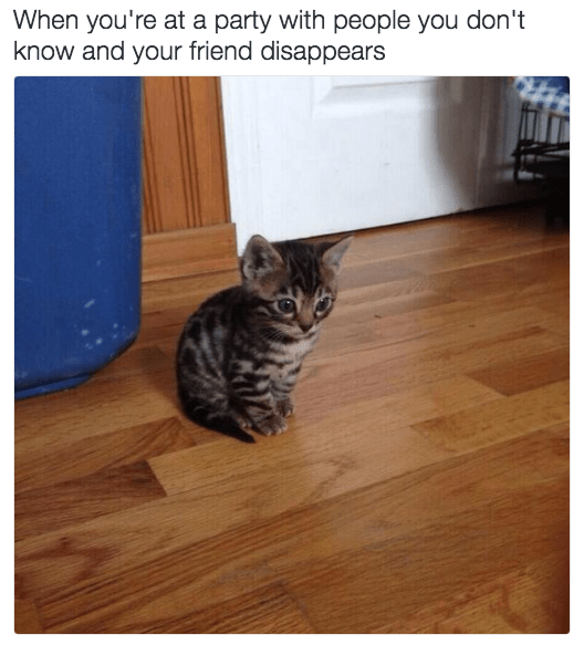 Cat - When you're at a party with people you don't know and your friend disappears
