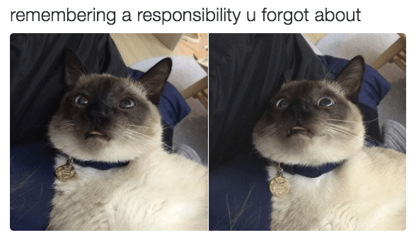 Cat - remembering a responsibility u forgot about