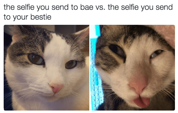 Cat - the selfie you send to bae vs. the selfie you send to your bestie