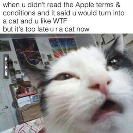 Cat - when u didn't read the Apple terms & conditions and it said u would turn into a cat and u like WTF but it's too lateura cat now VIA 9GAG.COM