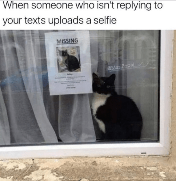 Cat - When someone who isn't replying to your texts uploads a selfie MISSING MasiPopal