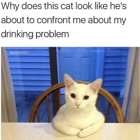 Cat - Why does this cat look like he's about to confront me about my drinking problem dabmoms