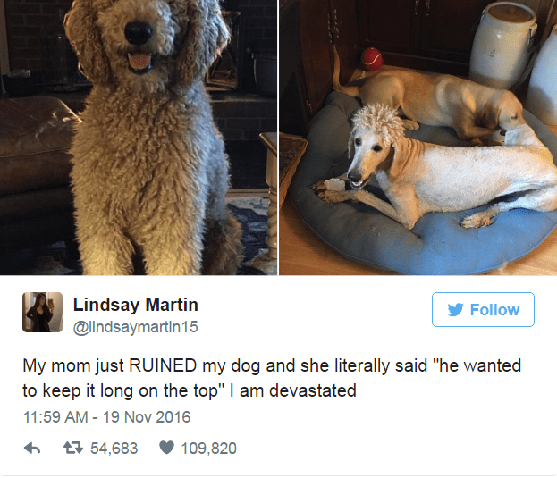 """Dog - Lindsay Martin @lindsaymartin15 Follow My mom just RUINED my dog and she literally said """"he wanted to keep it long on the top"""" I am devastated 11:59 AM 19 Nov 2016 t54,683 109,820"""