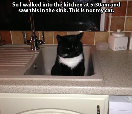 Funny picture of a cat hiding in the sink from someone who does not own a cat.