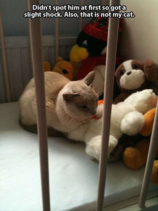 Funny picture of a cat in a baby bed from someone who does not own a cat.