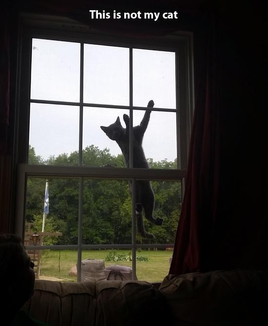 Funny picture of cat jumping into the window view of someone who does not own a cat.
