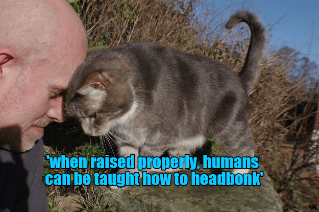 cat,properly,humans,raised,caption,headbonk