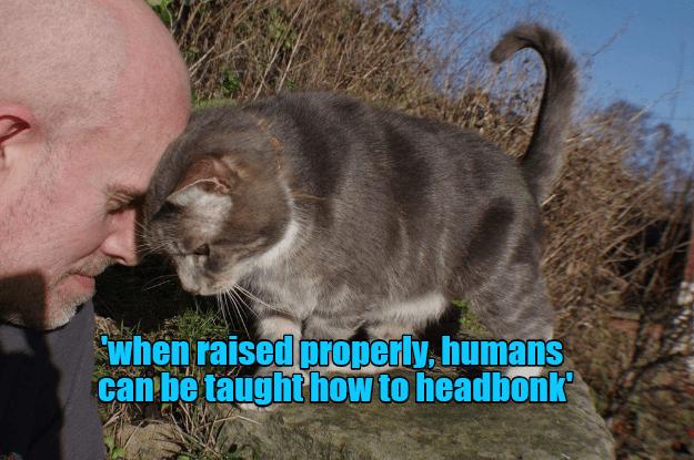 cat properly humans raised caption headbonk - 9009487360