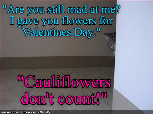 cat,cauliflower,flowers,mad,caption,Valentines day