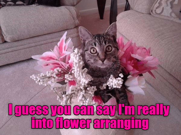 cat into Flower arranging caption - 9009795328