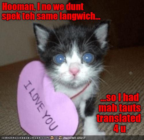 thoughts kitten language speak caption same - 9009801984