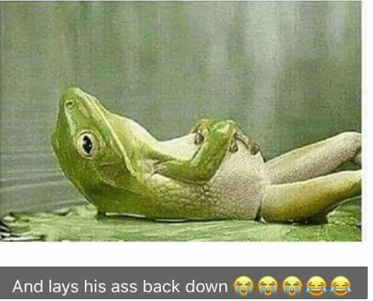 Frog - And lays his ass back down