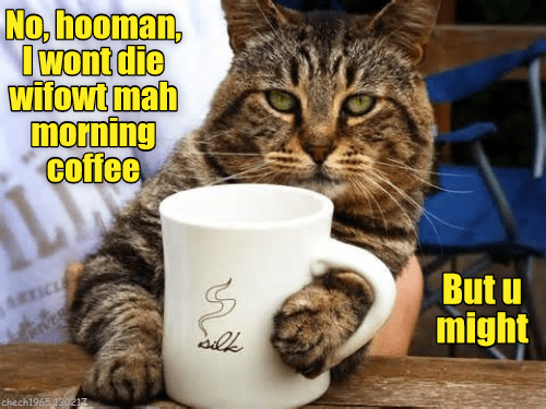 cat die morning wont coffee caption - 9010102784