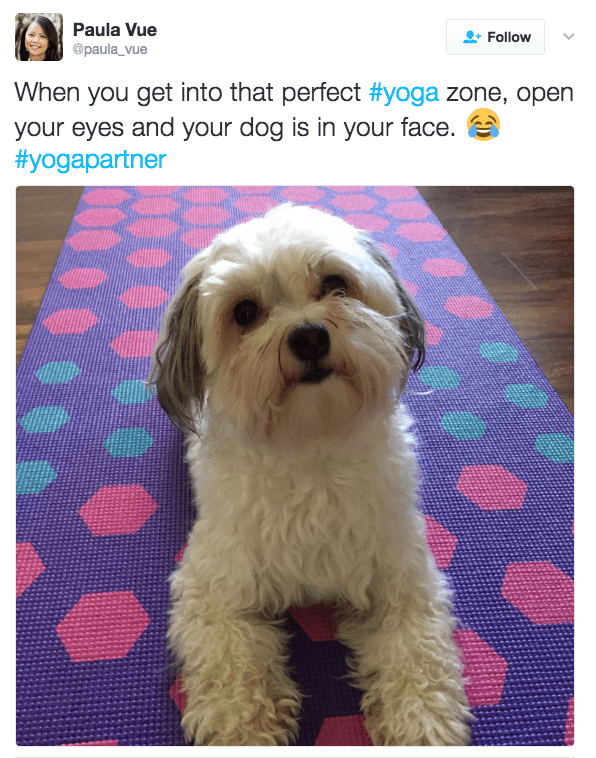 Dog - Paula Vue Follow @paula_vue When you get into that perfect #yoga zone, open your eyes and your dog is in your face. #yogapartner