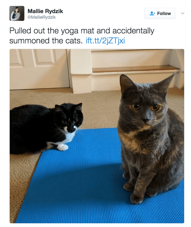 Cat - Mallie Rydzik @MallieRydzik Follow Pulled out the yoga mat and accidentally summoned the cats. ift.tt/2jZTjxi