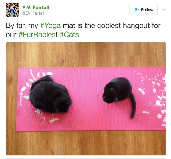 Puppy - E.V. Fairfall @EV_Fairfall Follow By far, my #Yoga mat is the coolest hangout for our #FurBabies! #Cats GAIAM