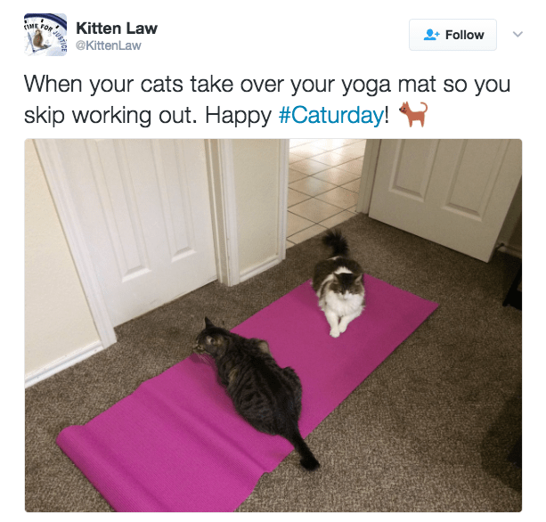 Floor - Follow Kitten Law OR VUE CIME @KittenLaw When your cats take over your yoga mat so you skip working out. Happy #Caturday!