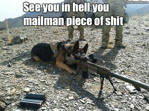 Meme of dank dog with sniper rifle on that mailman