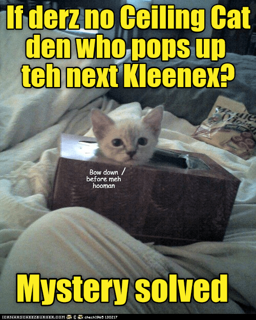 next kitten ceiling cat kleenex pops up caption no - 9010354688