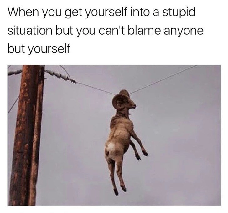 Dog - When you get yourself into a stupid situation but you can't blame anyone but yourself