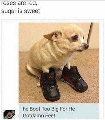 dank meme of a chihuahua wearing some big shoes