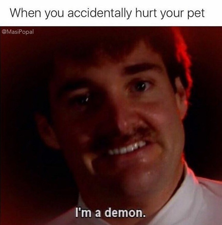 dank meme about the horrible feeling when you accidentally hurt your pet.