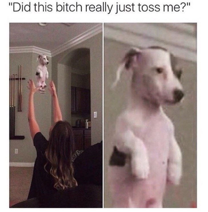 dog dank meme of dog reacting to being thrown