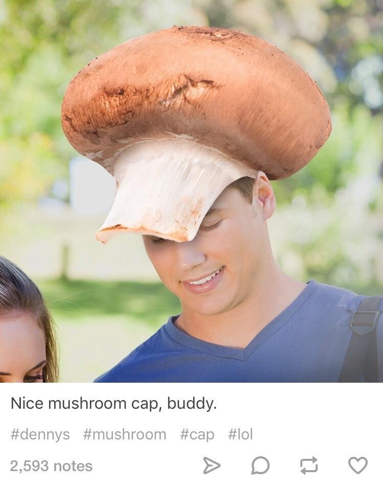 Head - Nice mushroom cap, buddy #dennys #mushroom #cap #lol 2,593 notes
