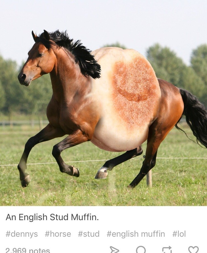 Horse - An English Stud Muffin. #dennys #horse #stud #english muffin #lol 2.969 notes