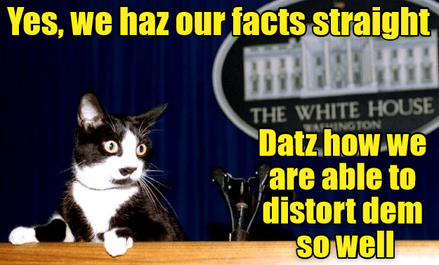 facts distort caption straight Cats - 9011072768