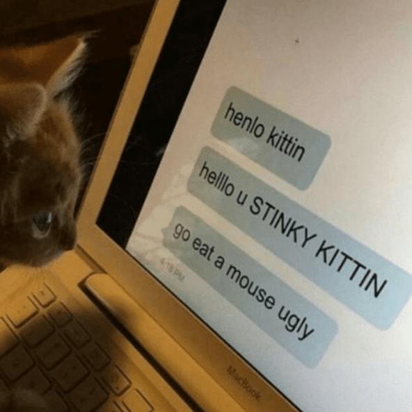 Cat - henlo kittin helllo u STINKY KITTIN go eat a mouse ugly 418 P MacBook