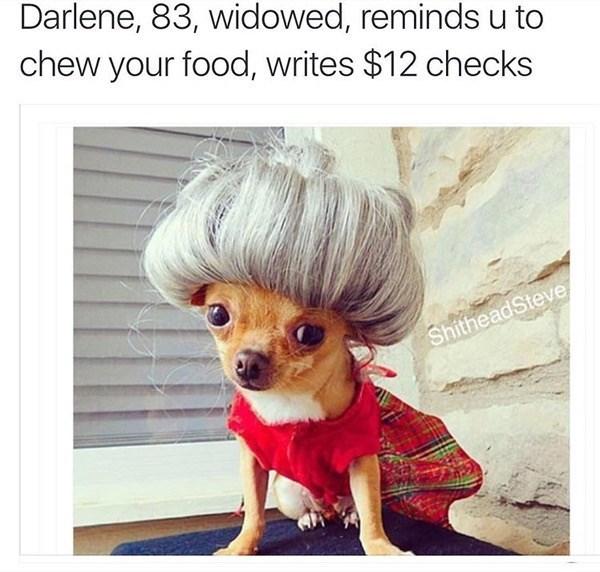 Dog - Darlene, 83, widowed, reminds u to chew your food, writes $12 checks ShitheadSteve