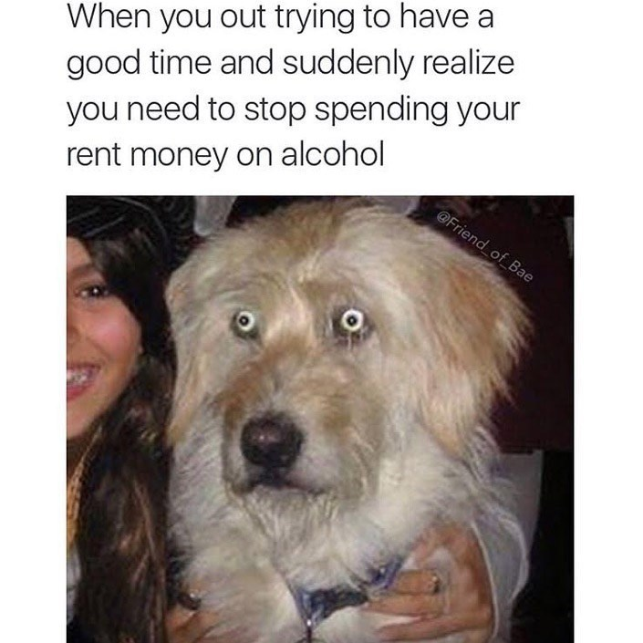 Dog - When you out trying to have a good time and suddenly realize you need to stop spending your rent money on alcohol @Friend of Bae