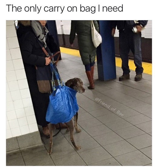 Dog - The only carry on bag I need @Friend of Bae