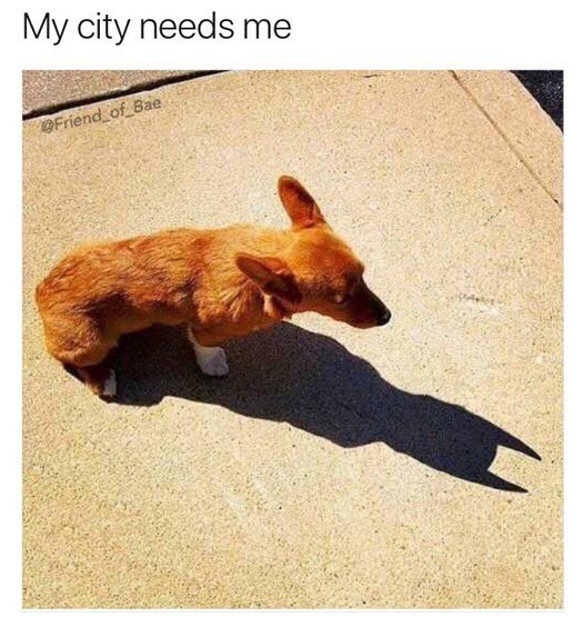 Canidae - My city needs me Friend of Bae