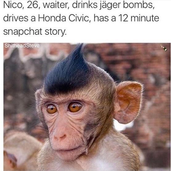 Mammal - Nico, 26, waiter, drinks jäger bombs, drives a Honda Civic, has a 12 minute snapchat story. ShitheadSteve