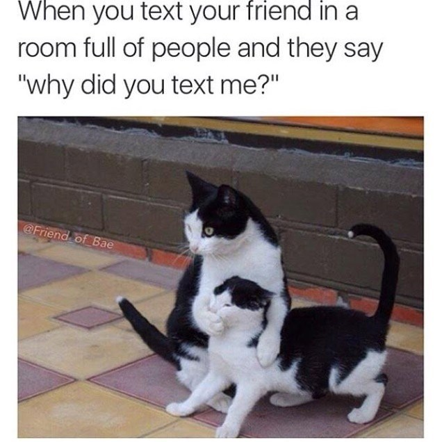 """Cat - When you text your friend in a room full of people and they say """"why did you text me?"""" @Friend of Bae"""