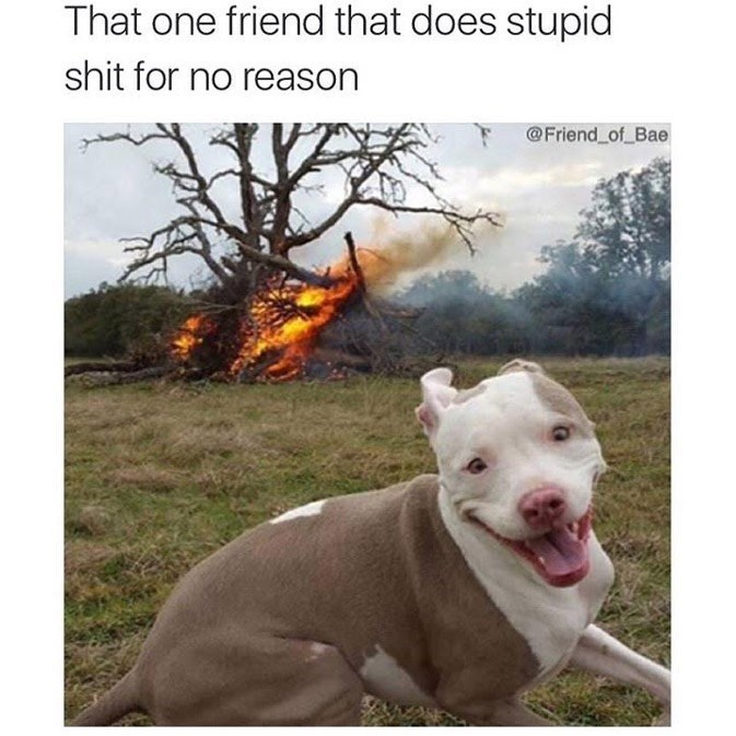 Vertebrate - That one friend that does stupid shit for no reason @Friend of Bae
