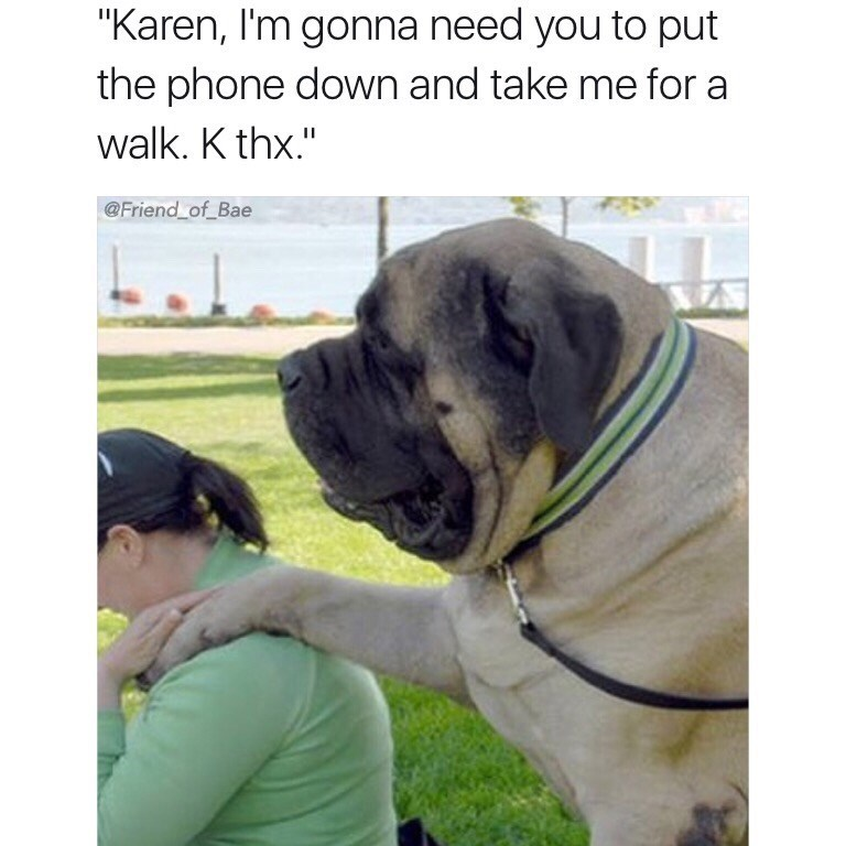 """Dog - """"Karen, I'm gonna need you to put the phone down and take me for a walk. K thx."""" @Friend of Bae"""