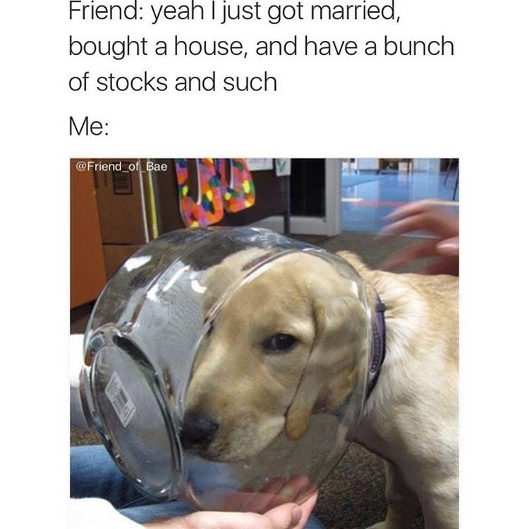 Dog - Friend: yeah I just got married, bought a house, and have a bunch of stocks and such Me: @Friend_of Bae