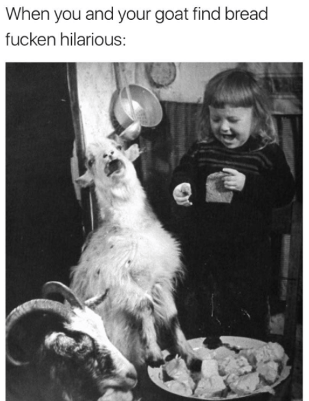Organism - When you and your goat find bread fucken hilarious: