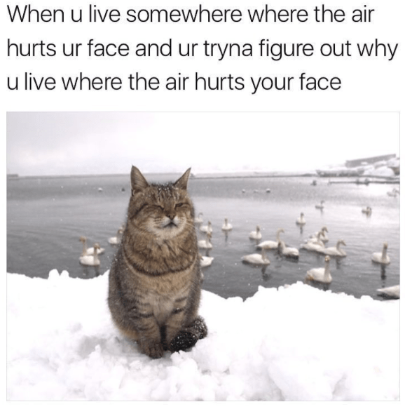 Cat - When u live somewhere where the air hurts ur face and ur tryna figure out why u live where the air hurts your face