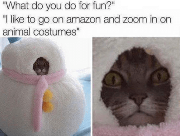 """Cat - """"What do you do for fun?"""" """"I like to go on amazon and zoom in on animal costumes"""""""