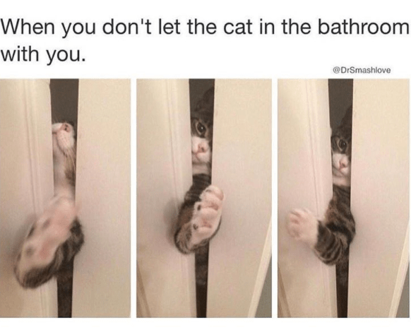 Text - When you don't let the cat in the bathroom with you. @DrSmashlove