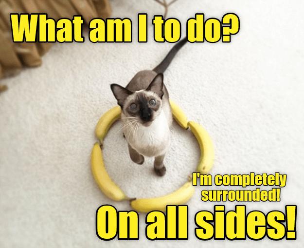 cat surrounded caption - 9011295488