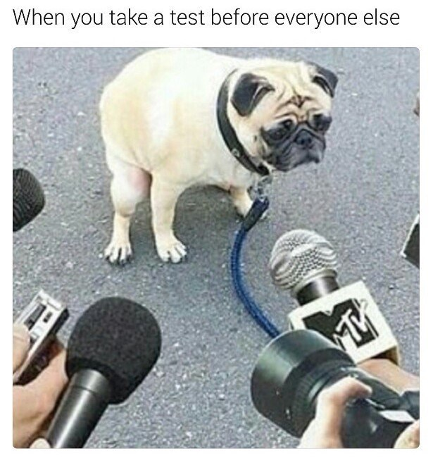 Pug - When you take a test before everyone else